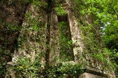 Janela coberto de vegetação Imagem de Stock