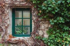 Janela coberto de vegetação com a hera Fotos de Stock Royalty Free