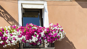 A janela com o petúnia de florescência do rosa floresce em Veneza, Itália fotografia de stock royalty free