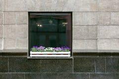 Janela com vasos de flores e as flores coloridas em uma parede urbana cinzenta Foto de Stock