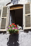 Janela da casa rural velha e de uma flor Imagens de Stock
