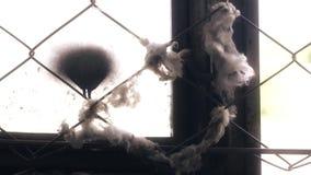 Janela de madeira quebrada em uma construção abandonada velha, rede da malha, com o algodão colado nele video estoque