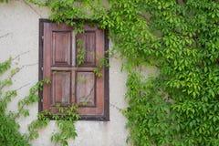 Janela de madeira velha coberto de vegetação com a hera, checa Fotografia de Stock
