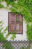 Janela de madeira velha coberto de vegetação com a hera, checa Imagens de Stock