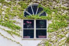 Janela de madeira velha coberto de vegetação com a hera em cores da queda Imagens de Stock Royalty Free