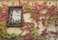 Janela de uma casa branca velha na vila medieval Perouges com c Fotografia de Stock