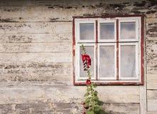 Janela de uma casa de madeira velha com crescimento de flores vermelho do malva perto dele ethnostil do conceito fotografia de stock royalty free