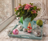 Janela do inverno com poinsétia (pulcherrima do eufórbio) com rosa Imagem de Stock Royalty Free