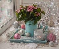 Janela do inverno com poinsétia (pulcherrima do eufórbio) com rosa Imagens de Stock