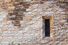 Janela em uma parede de pedra completamente da hera Fotografia de Stock