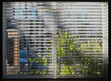 Janela espirrada luz do sol através das cortinas brancas Fotografia de Stock Royalty Free