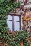 Janela velha cercada por plantas da hera do rastejamento Fotos de Stock