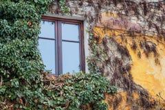 Janela velha cercada por plantas da hera do rastejamento Foto de Stock Royalty Free