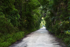 Janes Scenic Highway. The historic Janes Scenic Highway as it cuts through Fakahatchee Strand Preserve State Park, Florida Everglades Royalty Free Stock Photo