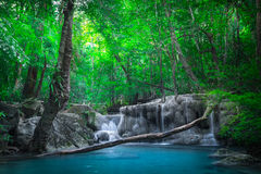 Jangle landscape with Erawan waterfall. Kanchanaburi, Thailand Royalty Free Stock Photos