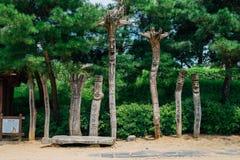 Jangseung, Koreański tradycyjny totemu słup z zielonym drzewem Obraz Stock