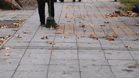 Janitor τακτοποιεί το σκούπισμα ξηρό βγάζει φύλλα στην οδό το φθινόπωρο απόθεμα βίντεο