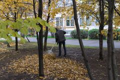 Janitor removes fallen leaves in the courtyard Stock Photos