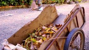 Janitor zamiata spadać liście z miotłą i zbiory