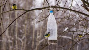 Jantando a garrafa para alimentar pássaros Fotografia de Stock Royalty Free