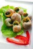 Jantar com os caracóis na manteiga de alho na placa Imagem de Stock