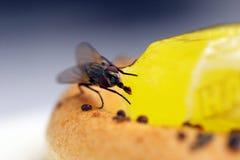 Jantar de um inseto Fotografia de Stock