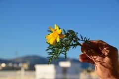 Januar-Frühlingsblume lizenzfreies stockbild