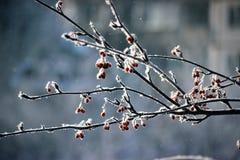 Januar-Morgen Stockfotografie