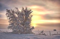 Januar-Sonne Stockbilder