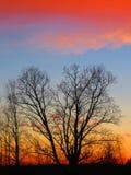 Januar-Sonnenuntergang Lizenzfreie Stockfotografie