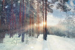 Januar-Winterlandschaft im Wald Stockfotografie