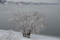 Januari dröm: Frostade Columbia, Richland, WA Arkivbild