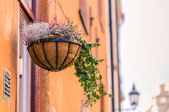 21 januari, 2017: Een vaas in een balkon in de oude stad van Sto Stock Fotografie