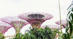 15 Januari 2016, Singapore - Supertree bij Tuinen door de Baai Stock Afbeelding
