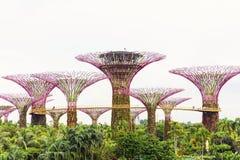 15 Januari 2016, Singapore - Supertree bij Tuinen door de Baai Royalty-vrije Stock Afbeelding