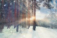 Januari vinterlandskap i skog Arkivbild