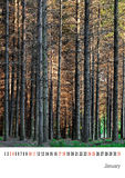 January calender 2015, pine trees. Easily customisable template. Fairly generic. Non specific start day of the week, with printing margins Stock Photography