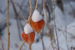Ice flowers-winter miracle, in Russia came frosts, whiter than white, Nizhny Novgorod region, fabulous flowers stock image