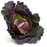January king cabbage Stock Image