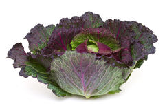 January king cabbage Stock Photography