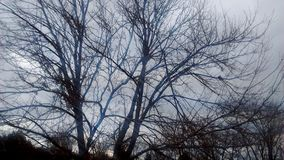 January Nature. Beautiful tree bare in the cold wearher Royalty Free Stock Photos