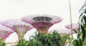 15 January 2016, Singapore - The Supertree at Gardens by the Bay Stock Image