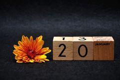 20 January on wooden blocks with an orange daisy. On a black background royalty free stock images