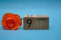 9 January on wooden blocks with an orange rose. On a blue background royalty free stock image