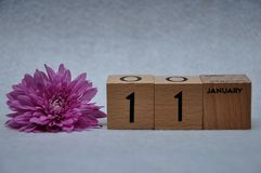 11 January on wooden blocks with a pink daisy. On a white background royalty free stock images