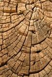 Starego drewnianego drzewnego projekta tła jałowcowa tekstura Obraz Royalty Free
