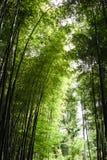 Japão, Kyoto, Arashiyama, vista da floresta de bambu imagens de stock