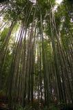 Japão, Kyoto, Arashiyama, vista da floresta de bambu foto de stock royalty free