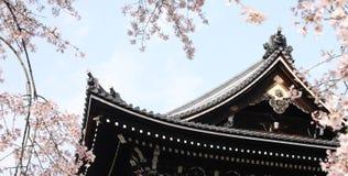 Japão Sakura Foto de Stock