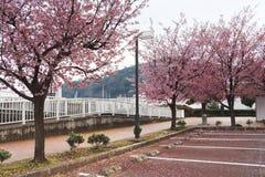Japão Sakura Fotografia de Stock Royalty Free